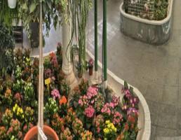 floristeria_el_galeon_recortada